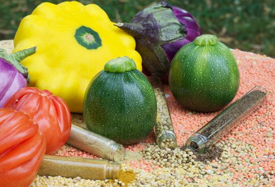 legumes-epices-legumineuses2